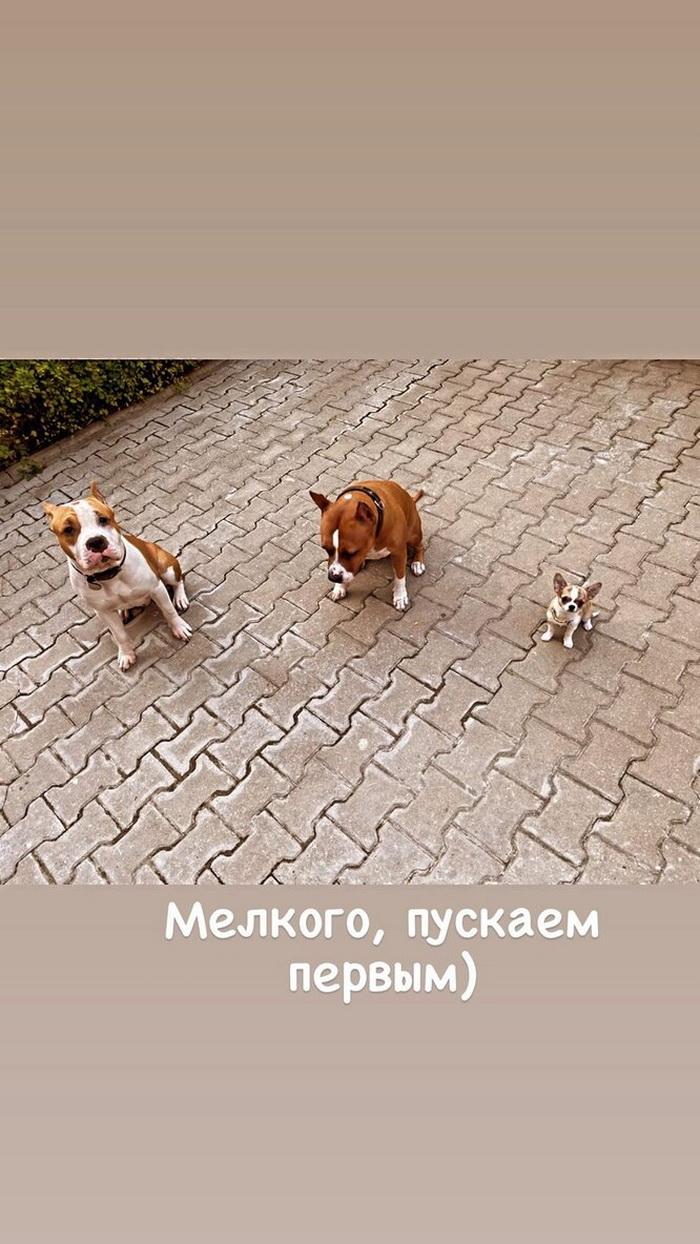 Прилучный показал, как запускает домашних животных в новый дом