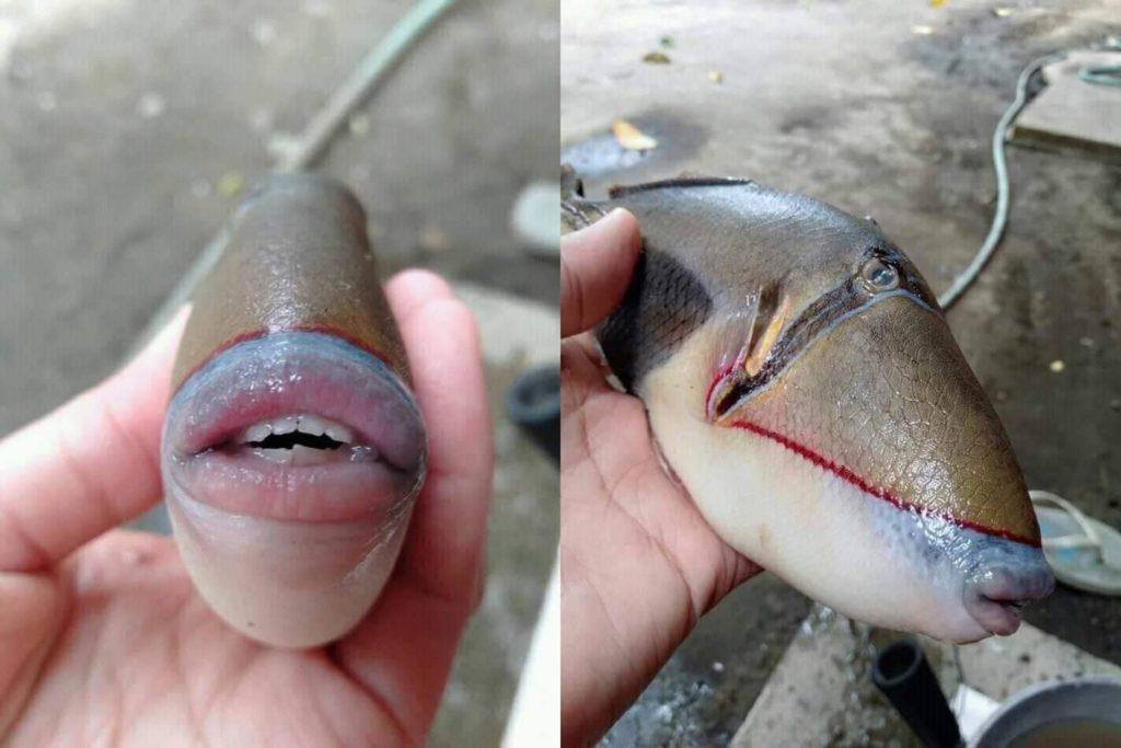 Рыба-триггер