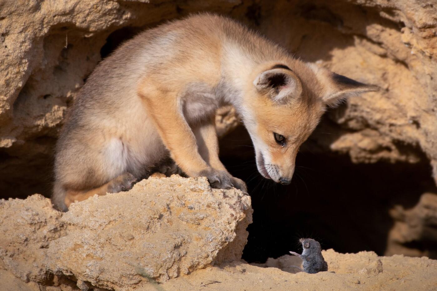 Премия комедийной фотографии дикой природы-2020 объявила призёров