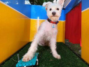 Изобретение американской блогерши для собак собрало полмиллиона лайков