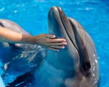 Роботы-дельфины