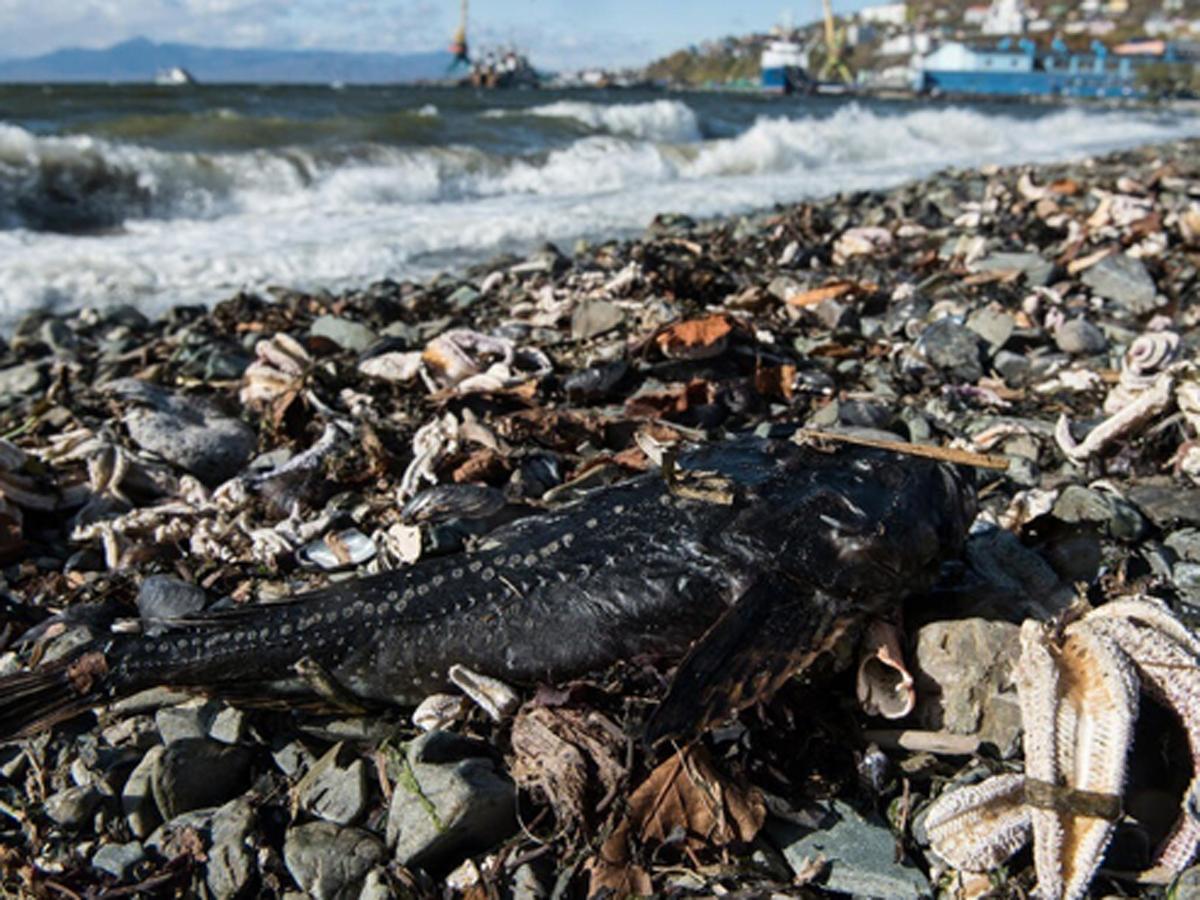 На Камчатке два новых места гибели животных