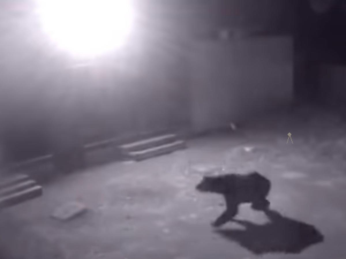 Медведь в Семенове