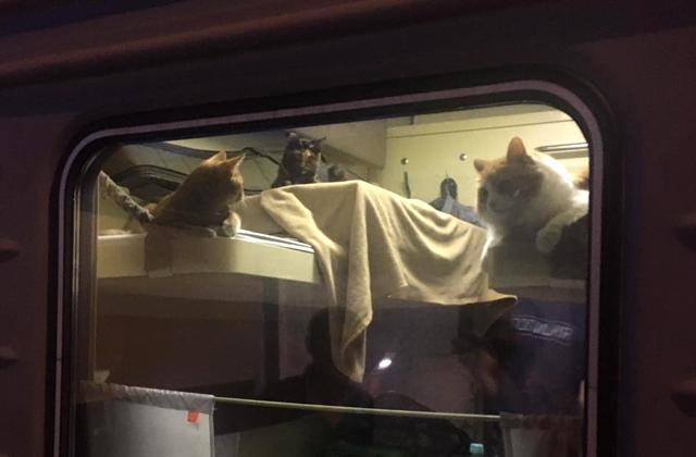 коты в поезде