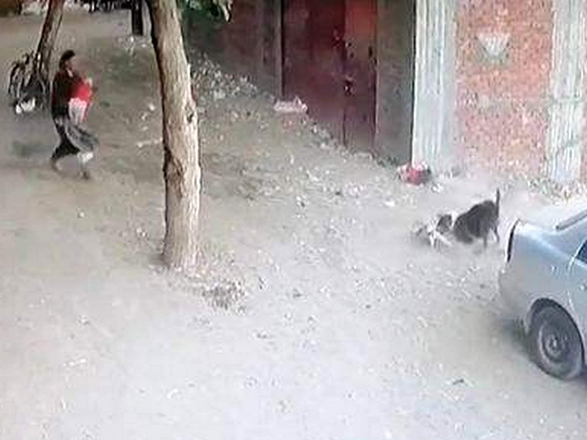 Видео с котом, спасшим ребенка от собаки, посмотрели более 15 тыс раз