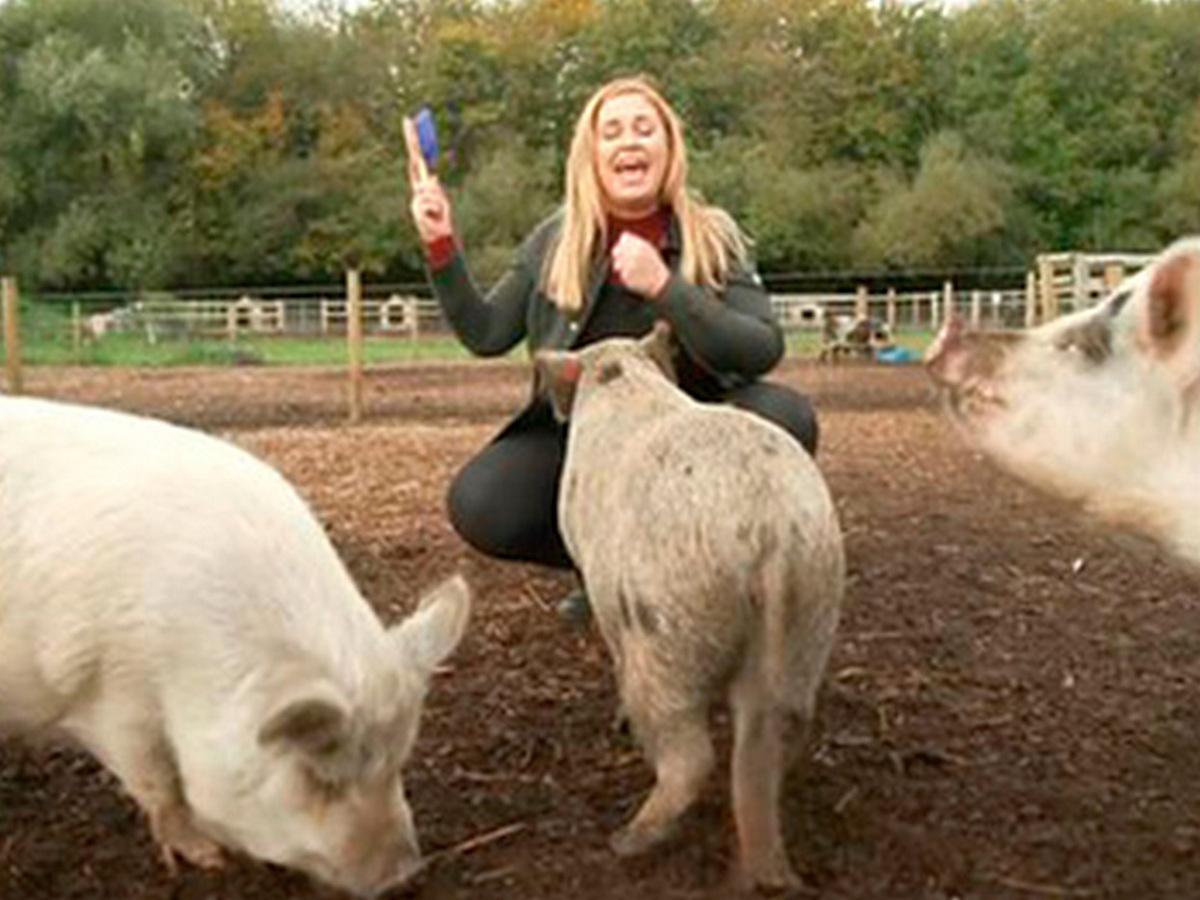 Свинья напала на телеведущую, когда она пыталась