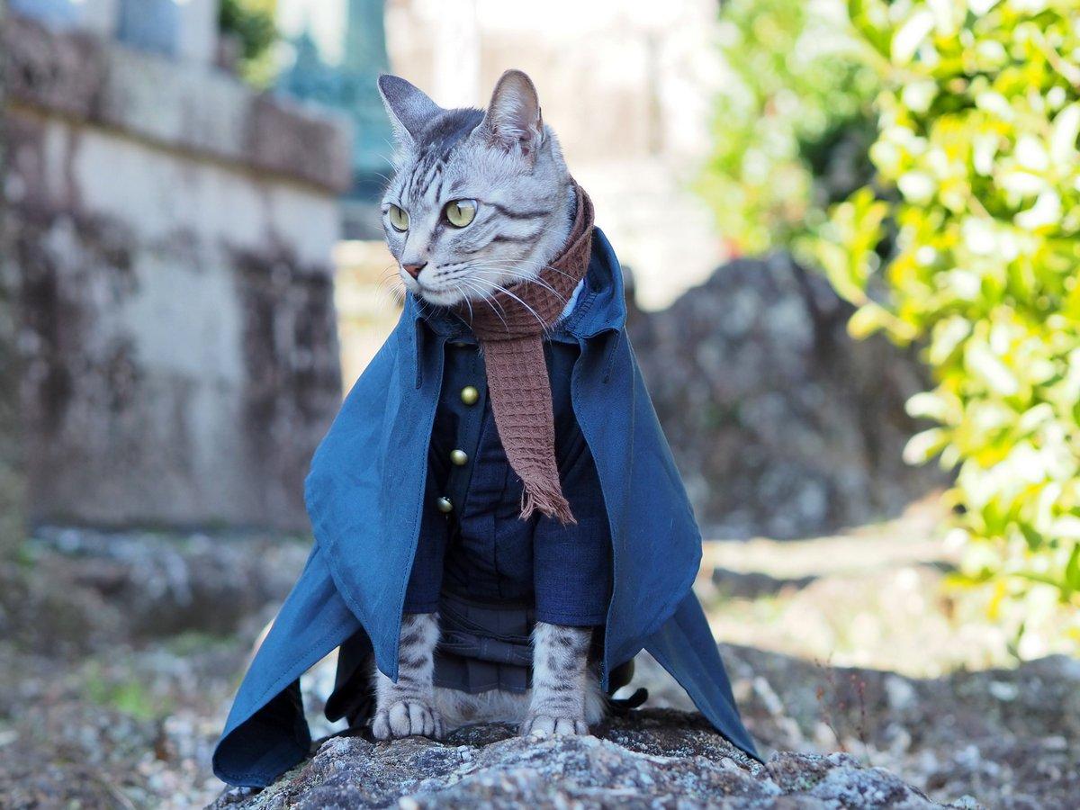 Интернет-пользователь из Японии прославился своими аниме-костюмами для кошек