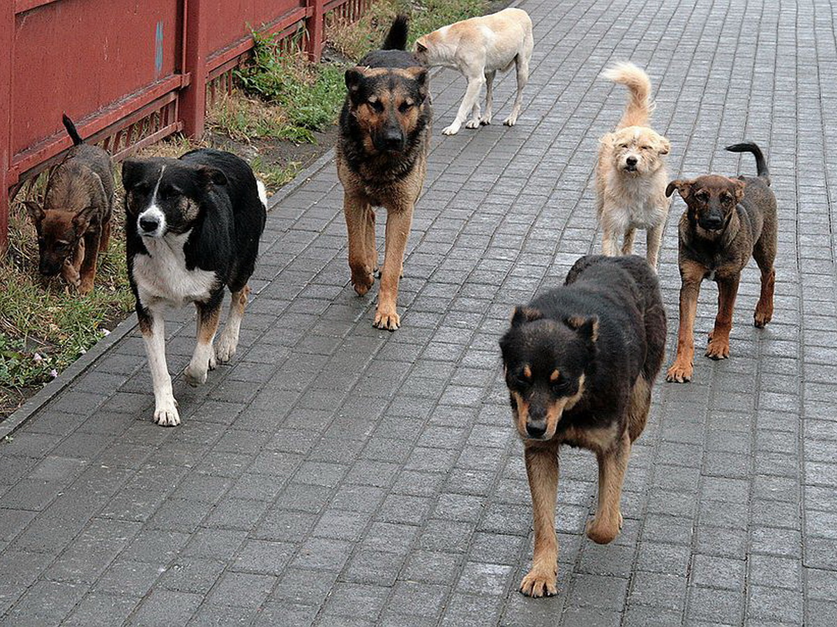 В Калуге бродячие собаки спасли девушку от изнасилования