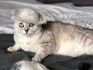 Владельцы кошки прославились в соцсетях дизайнерскими шапками из ее шерсти