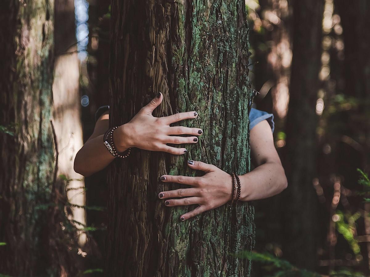 Обнять дерево