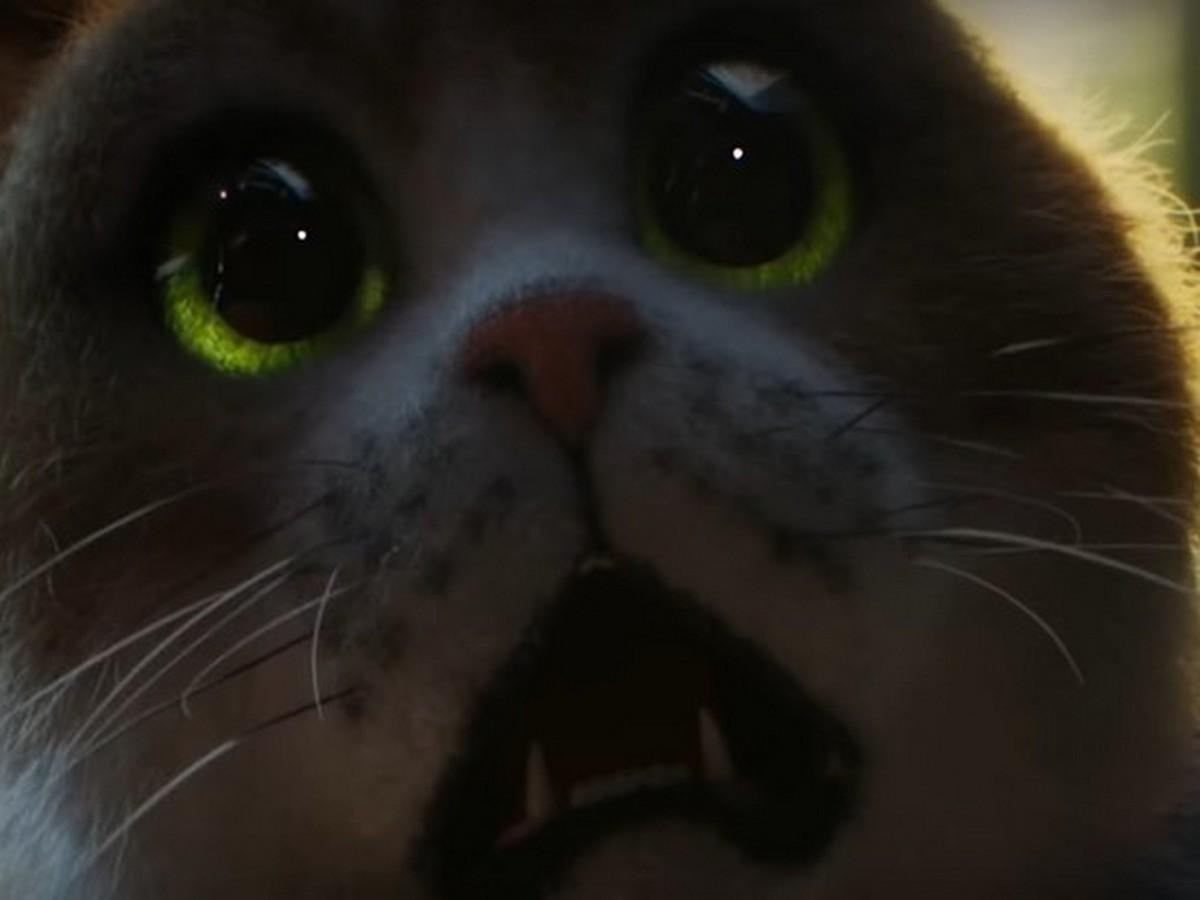 Фильм ужасов для котов