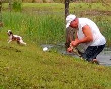 Американец спас щенка из пасти аллигатора