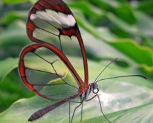 Бабочка со