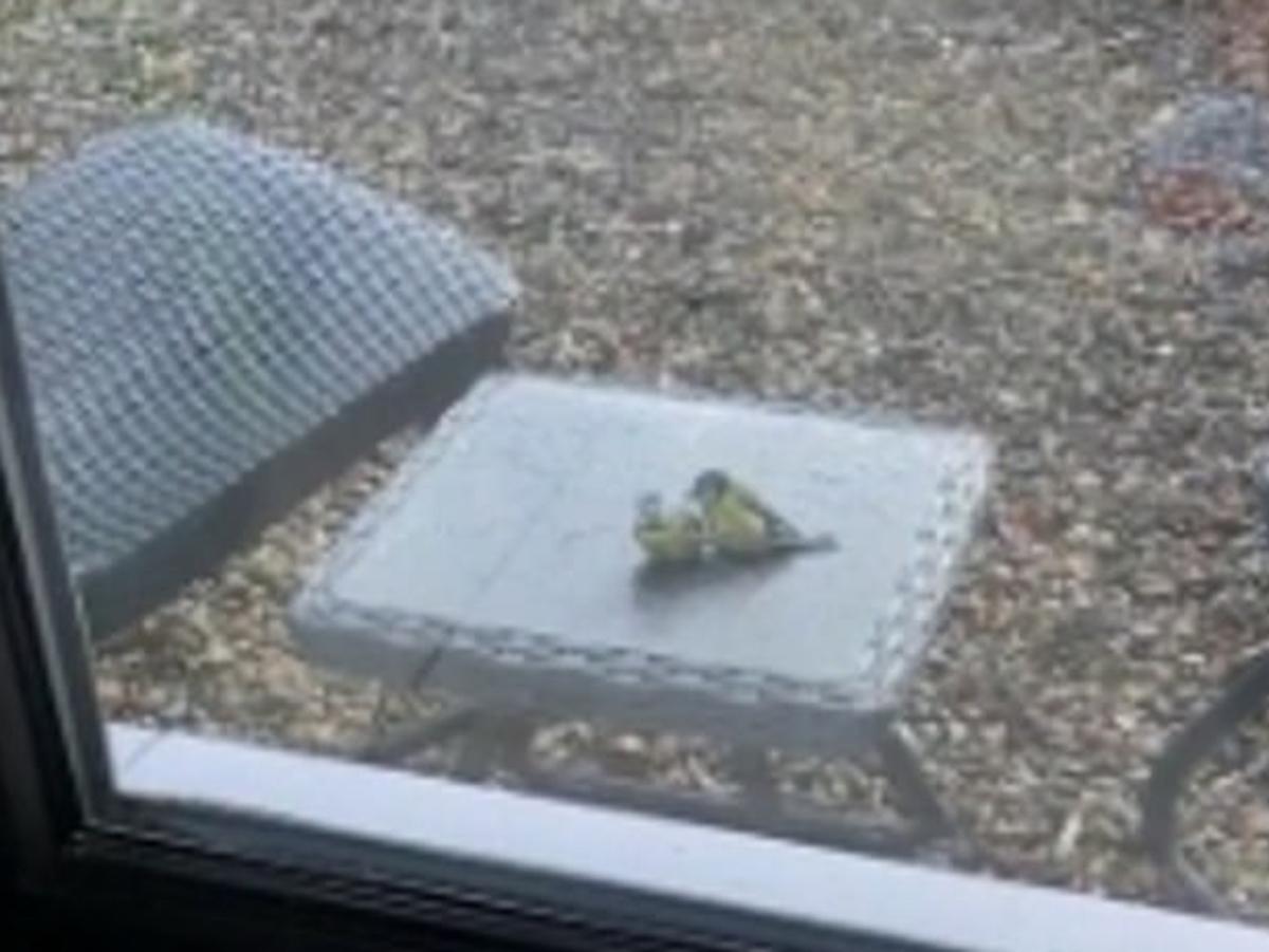 Синица оживила другую птицу