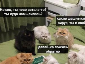 Сноуден о котах, зовущих Наташу
