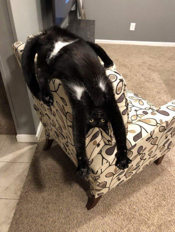 Кот со смешными подмышками