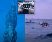 Австралиец снял на видео, как плавает гигантская рептилия