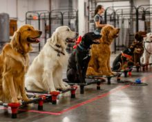 Ученые доказали, что собаки отказываются подчиняться роботам