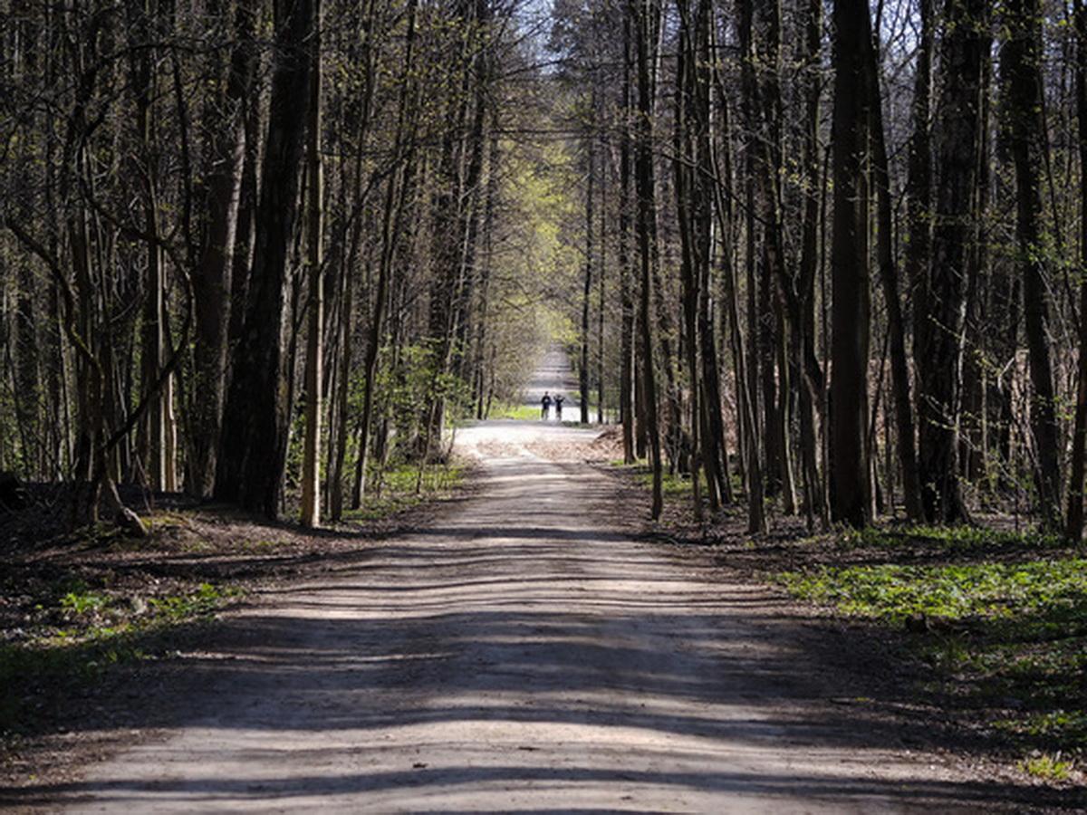 Житель Петербурга нашел в лесу мертвую женщину