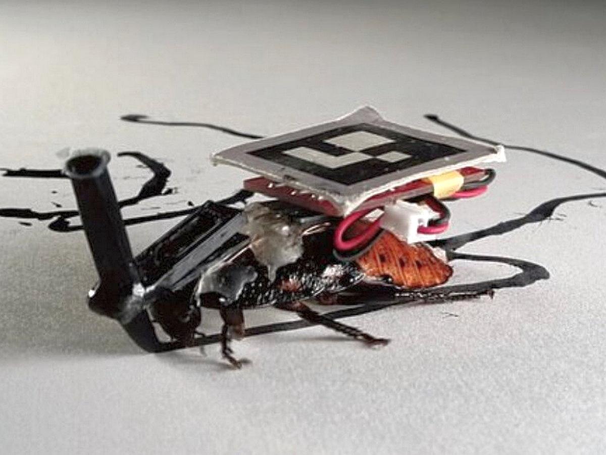 Японские инженеры вооружили тараканов аккумуляторами и чипами