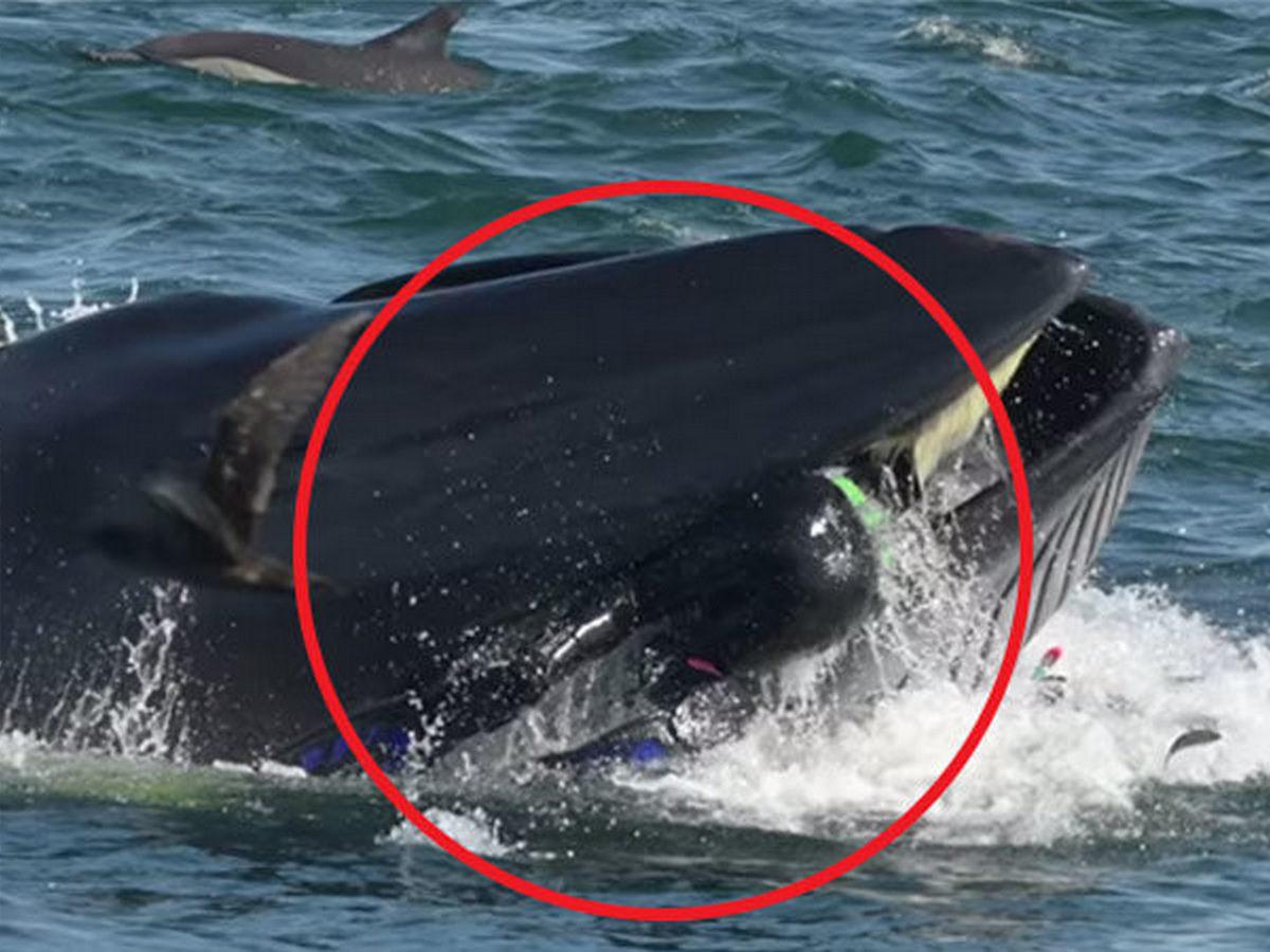 Видео с дайвером, попавшим в пасть киту, собрало 13, 5 млн просмотров