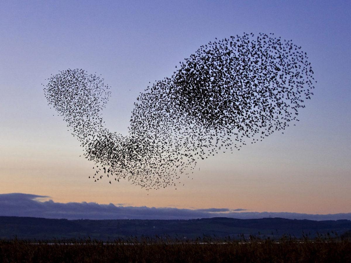 Завораживающий птичий