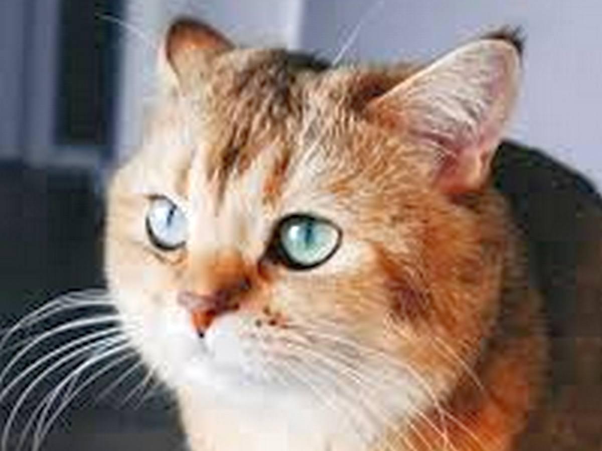 Кот прославился в Сети, удивившись щедрости хозяйки