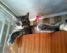 Кошка на кухонном шкафу