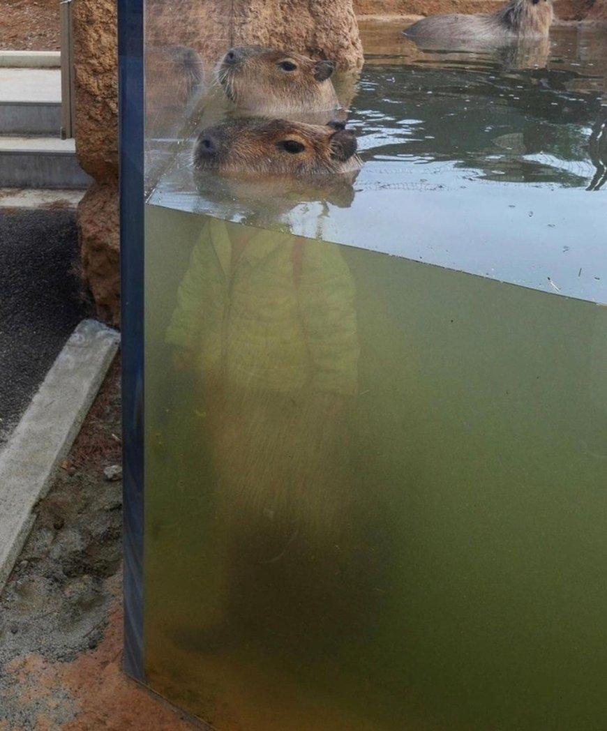 Интернет-пользователи обсуждают снятый в зоопарке смешной снимок.