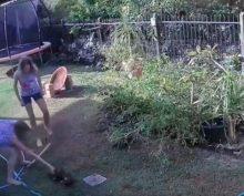 Хозяйка щенка голыми руками спасла его от питона