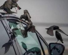 Ученые выяснили, какие автомобили больше нравятся птицам
