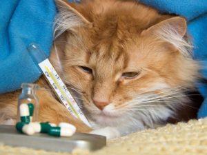 Российские ученые впервые изучили коронавирус у кота
