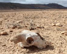 Массовое вымирание