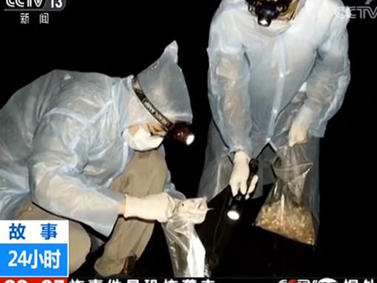 Ученые из Уханя признались, что их покусали летучие мыши с COVID-19