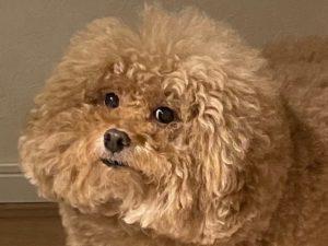 Квадратная собака из Японии породила сотни мемов