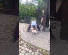 Пес так обрадовался встрече, что едва не покалечил хозяина