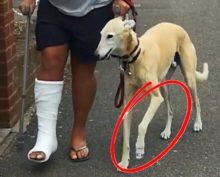 Собака заставила хозяина раскошелиться, спародировав его