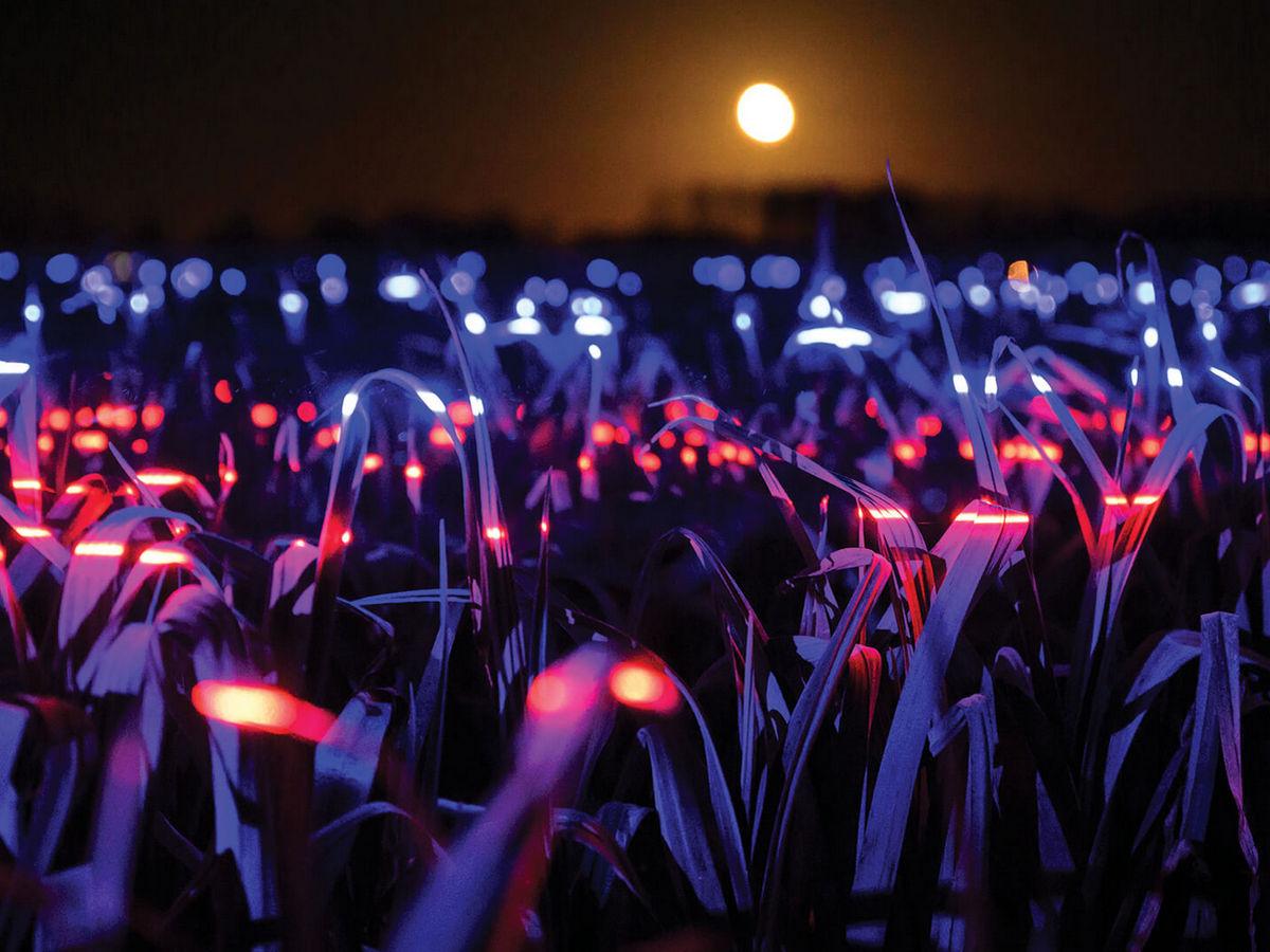 Художник устроил световую инсталляцию на плантации