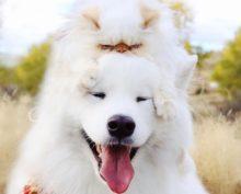Весёлый пес и угрюмый кот стали звездами Инстаграма