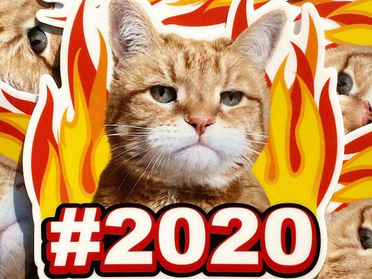 Интернет-пользователи выбрали кота, олицетворяющего 2020 год