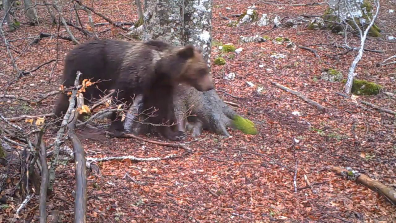 Один год из жизни дерева в национальном итальянском парке сняли на видео