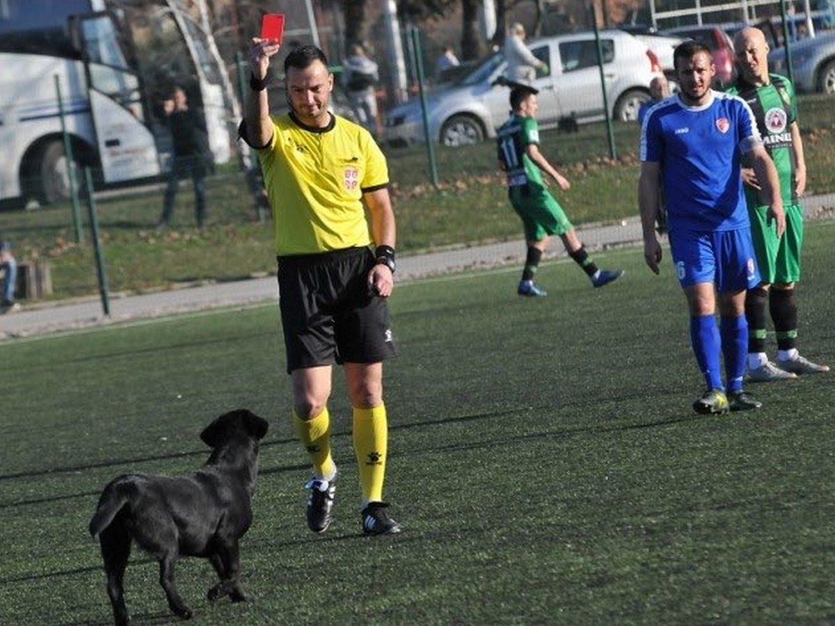 В Сербии матч прервали из-за собаки, которая не пожелала покидать поле
