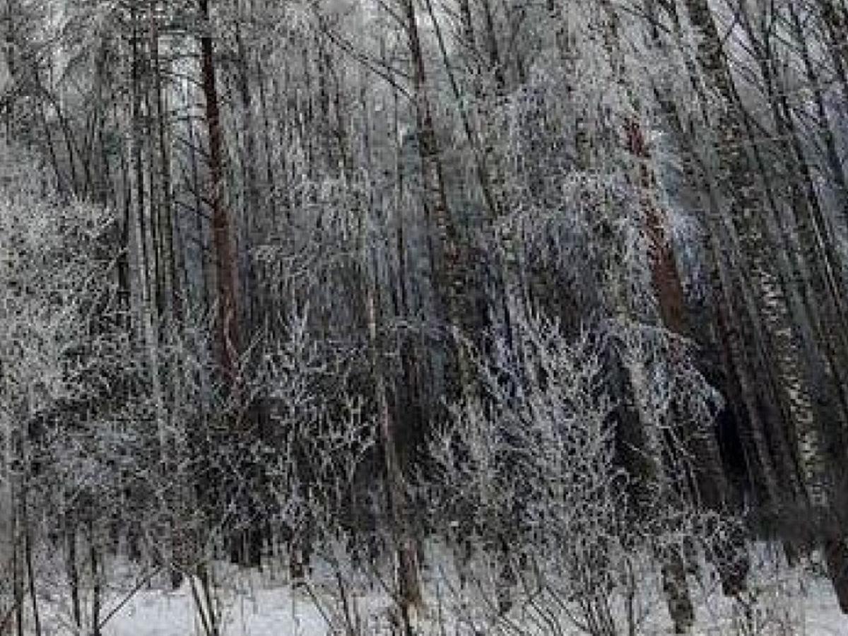 Многодетная москвичка раздела детей и оставила умирать в лесу
