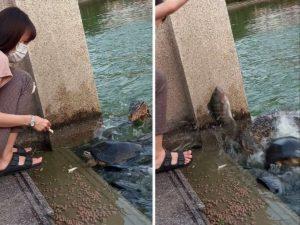 Девушка едва не лишилась рассудка, когда на нее из воды выпрыгнуло нечто