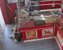 Пес-разиня, проспавший ограбление магазина, стал интернет-звездой
