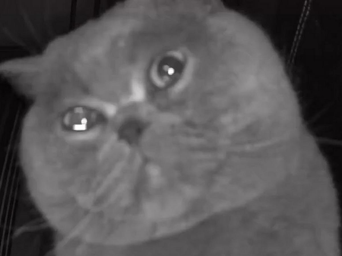 Плачущий кот собрал 28 тыс. просмотров в YouTube