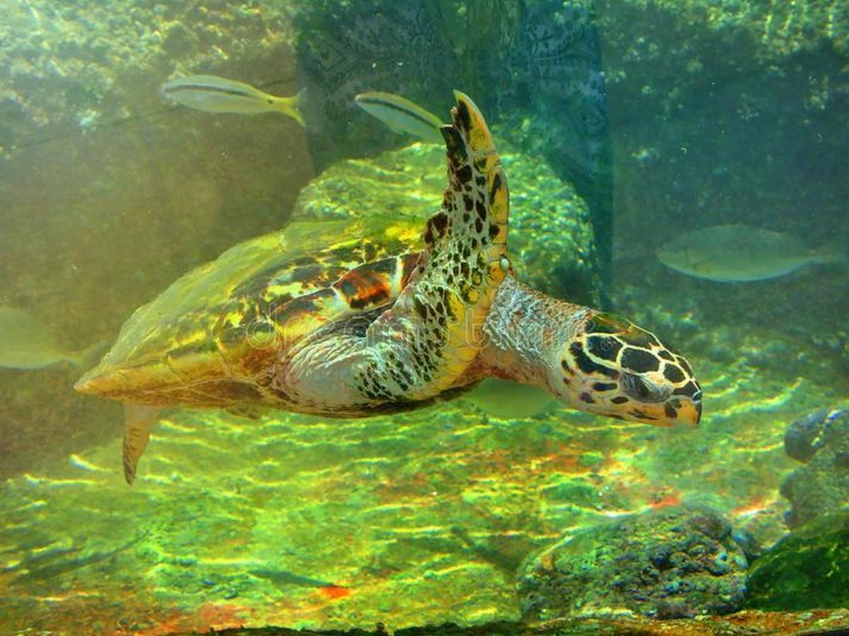 Ветеринары из Израиля лечат черепах с помощью майонеза