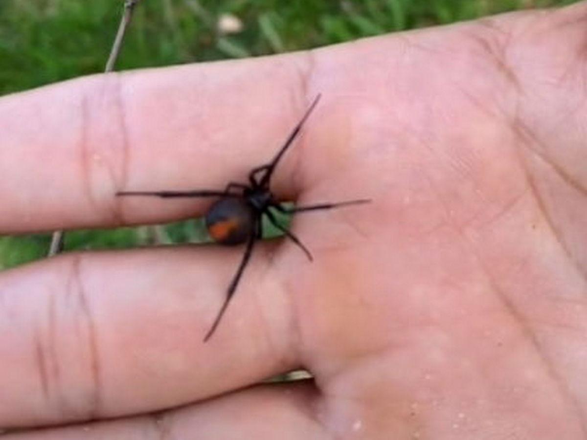 Блогер шокировал подписчиков, взяв в руки смертельно ядовитое насекомое