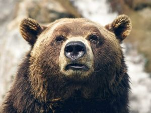Американку в туалете укусил медведь
