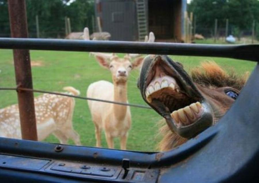 Самые смешные фотобомбы с участием животных